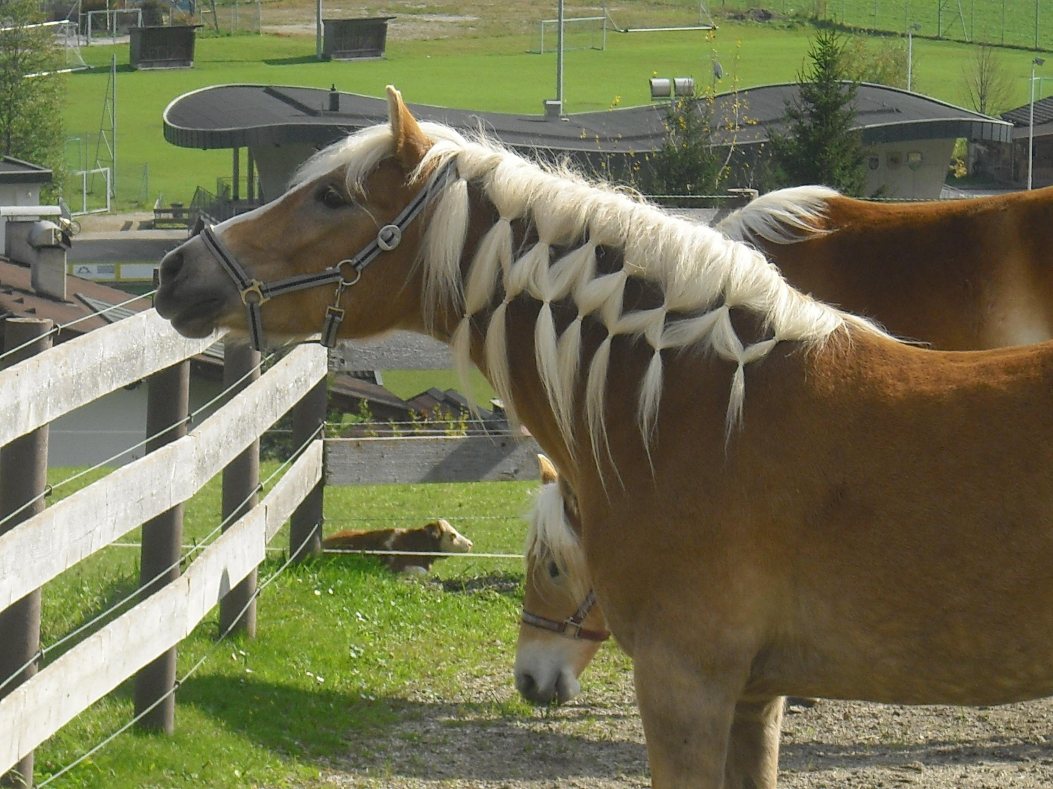 Maehnennetz pferdefrisuren Mähnennetz Pferdefrisur   Anleitung mit Bildern zum Mähne flechten